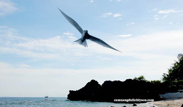 Chim Hải Âu lúc sáng sớm ở Đảo Bé