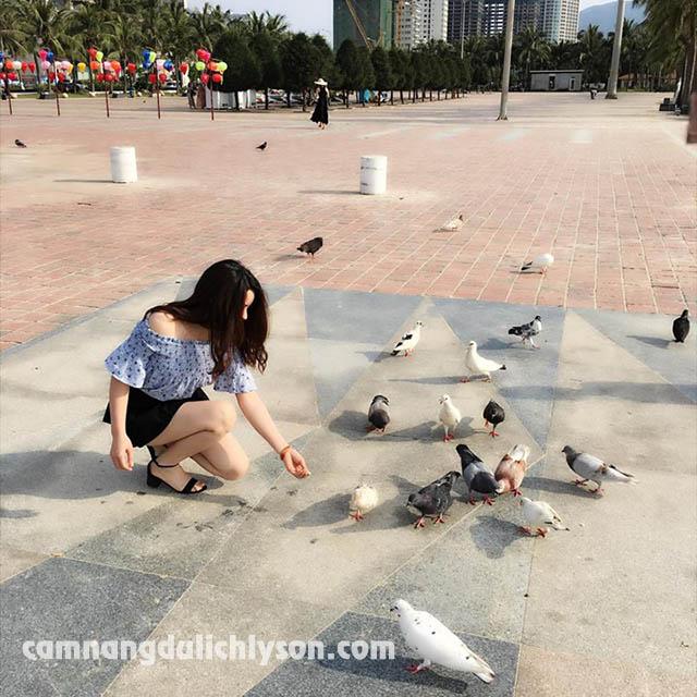 Công viên Biển Đông cho chim bồ cầu ăn