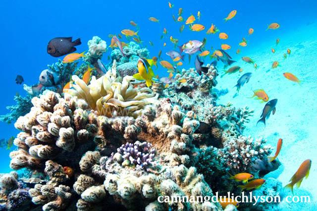 Hệ sinh vật dưới đáy biển khi ngắm san hô ở Lý Sơn vô cùng phong phú
