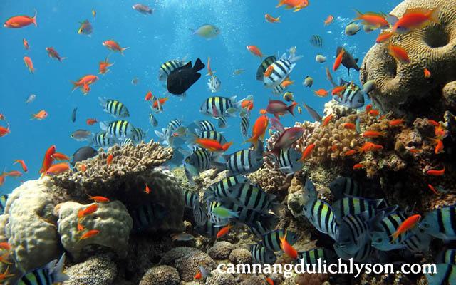 Các loài cá đầy màu sắc sống quanh san hô