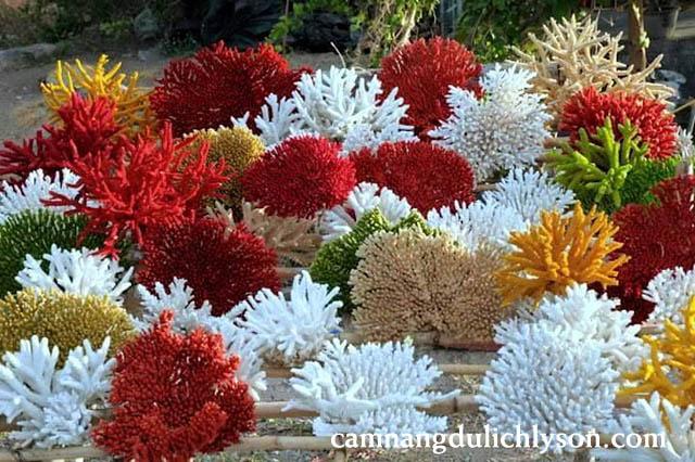 San hô đầy đủ các loại với nhiều màu sắc hấp dẫn