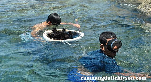 Bắt nhum biển ở Đảo Lý Sơn
