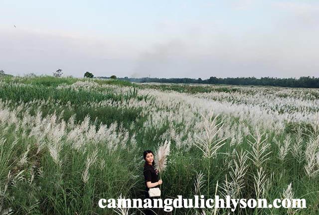 Cánh đồng cỏ lau ở Quảng Ngãi