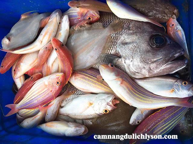 Cá dành cho bữa tối tại Lý Sơn tươi, ngonCá dành cho bữa tối tại Lý Sơn tươi, ngon