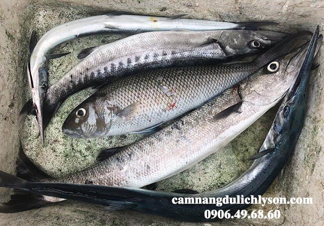 Những con cá chuyến lợi phẩm cho chuyến đi câu tại Lý Sơn