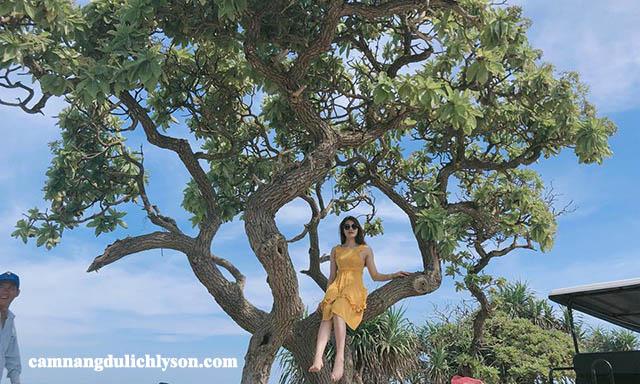 Cây cô đơn Đảo Bé Lý Sơn