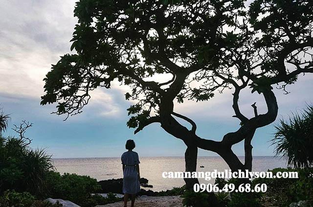 Check-in cây phong ba Đảo Bé