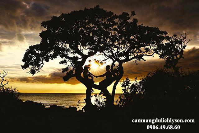 Đón hoàng hôn cùng cây cô đơn Đảo Bé