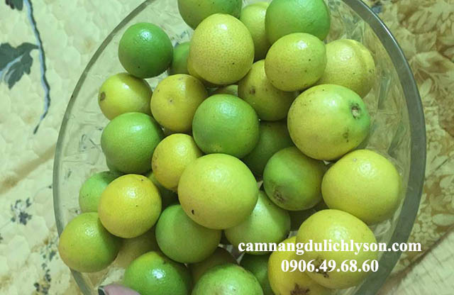 Những quả cam dại là món quà thiên nhiên đã ban tặng cho Đảo Bé Lý Sơn